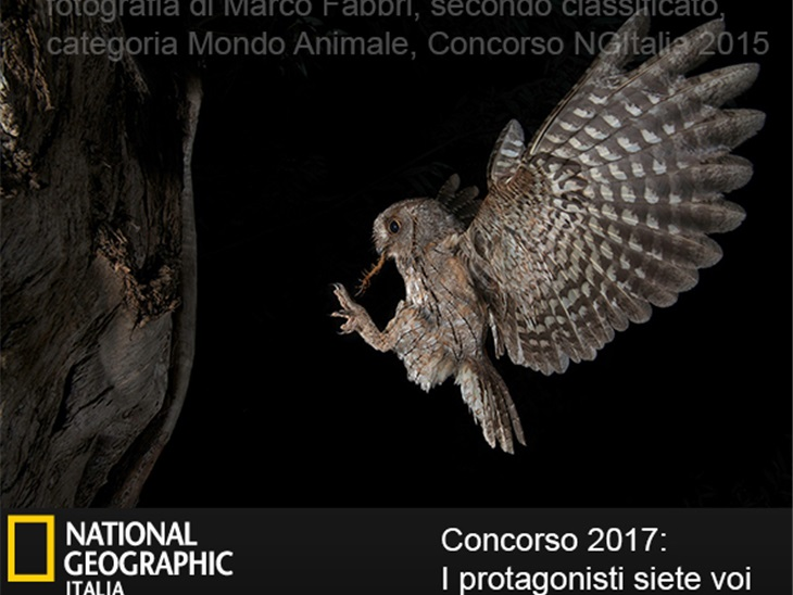 Topcolor Dream per il concorso del National Geographic